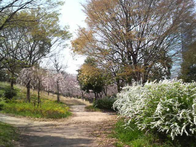 今日の大阪城公園