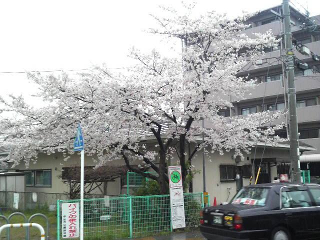 春寒の京都へ